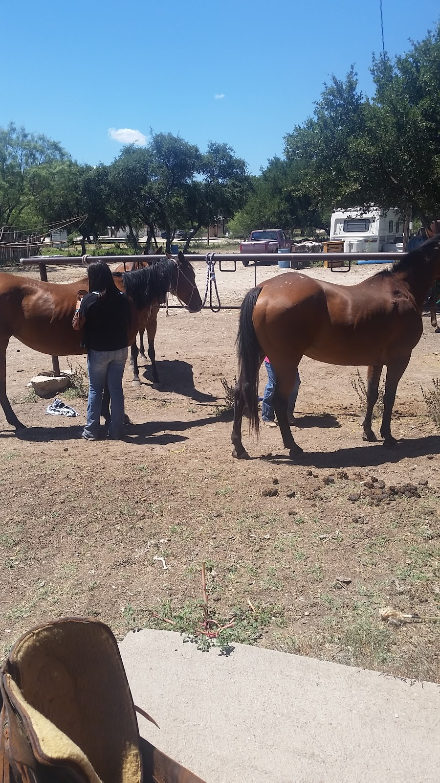 Adams Ranch Quarterhorses - travel agency  | Photo 1 of 6 | Address: 20791 US-277, Christoval, TX 76935, USA | Phone: (325) 277-4151