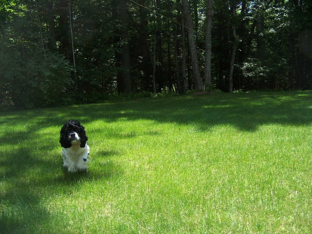 Lawn Dawg - home goods store  | Photo 7 of 10 | Address: 38 U.S. 9, Fishkill, NY 12524, USA | Phone: (845) 795-7044