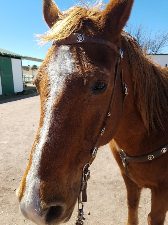 Ariz Horseback Experience - store    Photo 8 of 10   Address: 16 Coyote Ct, Sonoita, AZ 85637, USA   Phone: (520) 455-5696