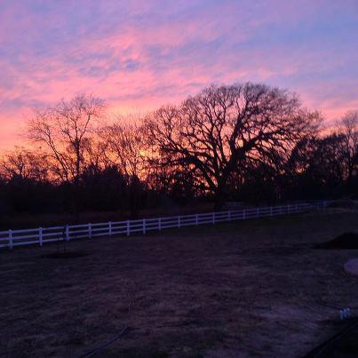 Cross Timber Ranch Bed & Breakfast - lodging  | Photo 7 of 10 | Address: 6271 Farm to Market Rd 858, Ben Wheeler, TX 75754, USA | Phone: (903) 833-9000