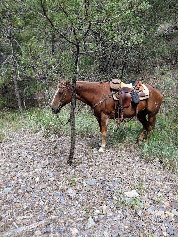 Ariz Horseback Experience - store    Photo 4 of 10   Address: 16 Coyote Ct, Sonoita, AZ 85637, USA   Phone: (520) 455-5696