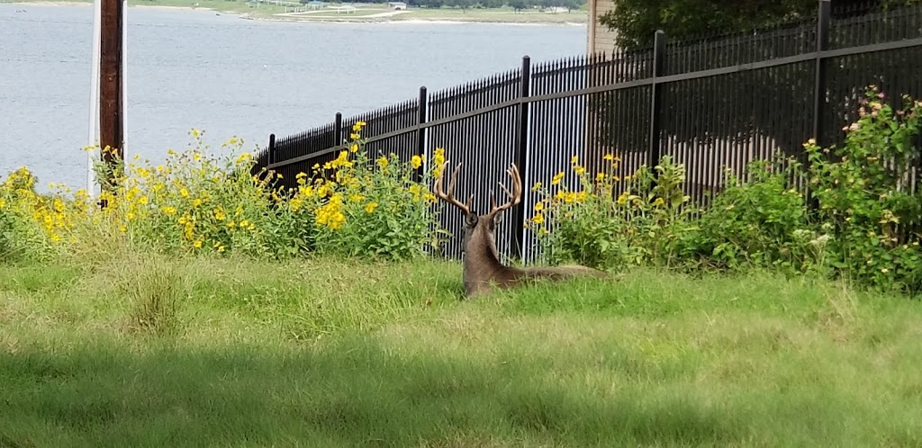 Isla Vista - House By The Lake - lodging  | Photo 5 of 8 | Address: 1363 Amanda Dr, Canyon Lake, TX 78133, USA