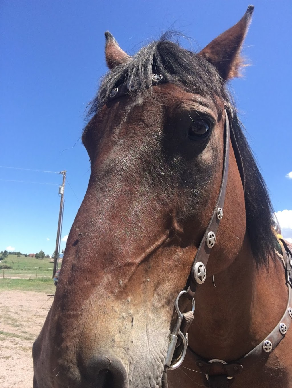 Ariz Horseback Experience - store    Photo 6 of 10   Address: 16 Coyote Ct, Sonoita, AZ 85637, USA   Phone: (520) 455-5696