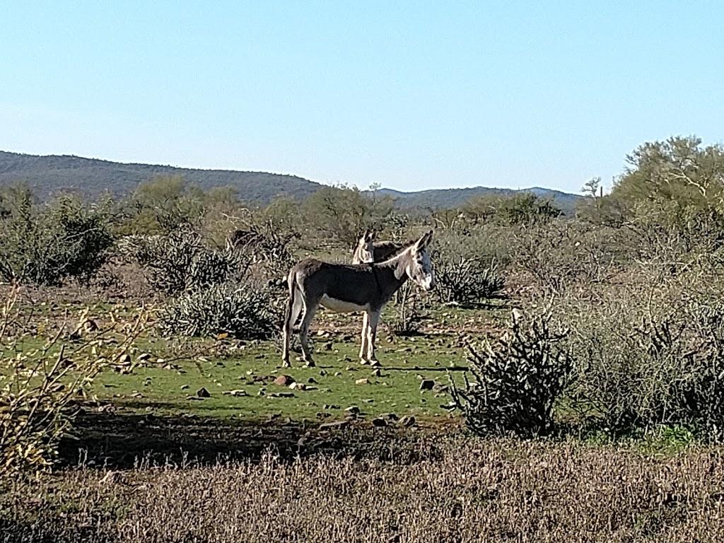 Camp Spot (BLM) - lodging  | Photo 3 of 10 | Address: Morristown, AZ 85342, USA