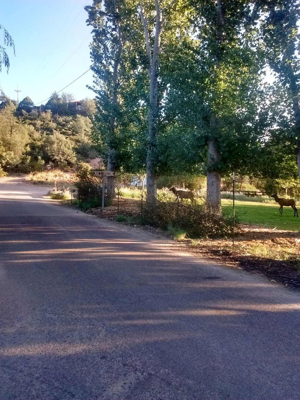 Shady Haven RV Park | lodging | 141 West W Haught Rd, Payson, AZ 85541, USA | 9284748222 OR +1 928-474-8222