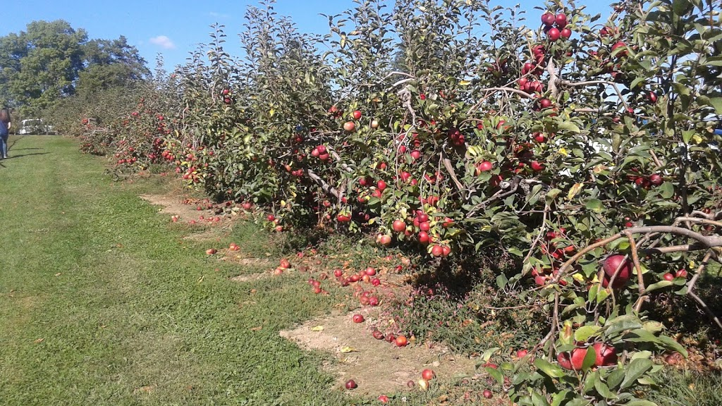 Milburn Orchards - store  | Photo 7 of 10 | Address: 1495 Appleton Rd, Elkton, MD 21921, USA | Phone: (410) 398-1349