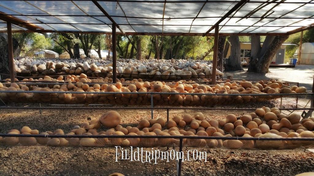 Welburn Gourd Farm - store    Photo 1 of 10   Address: 40635 De Luz Rd, Fallbrook, CA 92028, USA   Phone: (760) 728-4271