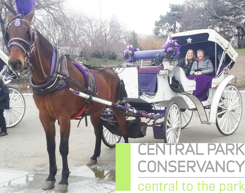 CENTRAL PARK CARRIAGES NEW YORK OFFICIAL | travel agency | 7th Ave. Central Park South, New York, NY 10019, USA | 3478739213 OR +1 347-873-9213