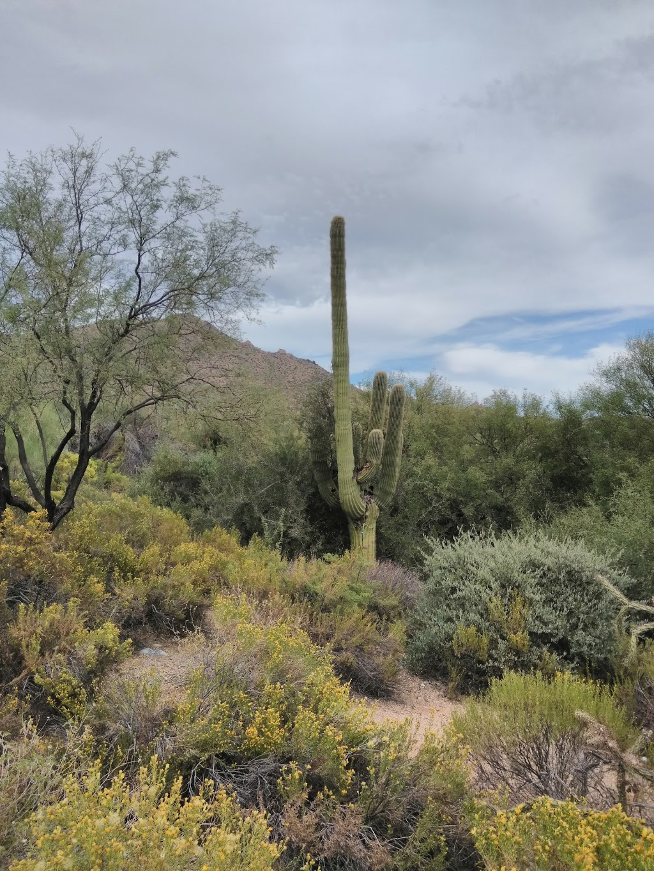 Desert Golf Properties, LLC - real estate agency  | Photo 2 of 10 | Address: 41817 N Stone Cutter Dr, Scottsdale, AZ 85262, USA | Phone: (480) 488-4762