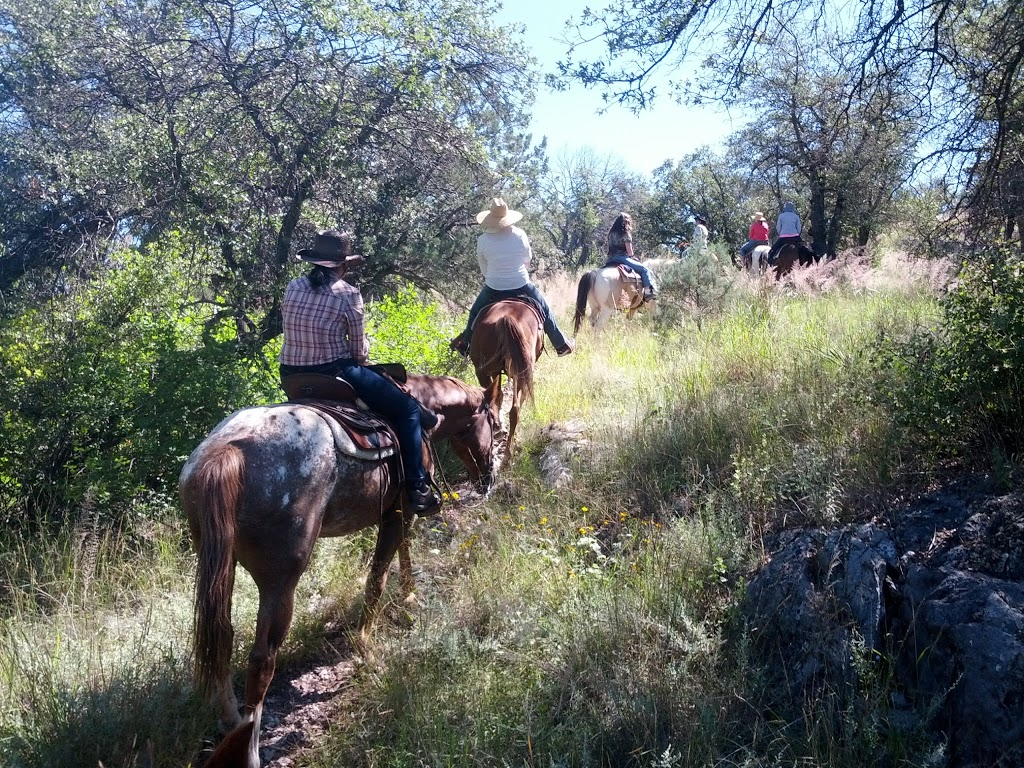 Ariz Horseback Experience - store    Photo 2 of 10   Address: 16 Coyote Ct, Sonoita, AZ 85637, USA   Phone: (520) 455-5696