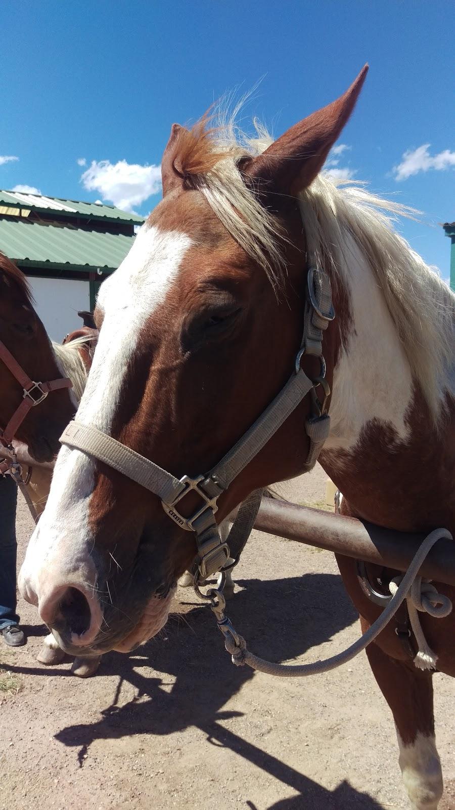 Ariz Horseback Experience - store    Photo 1 of 10   Address: 16 Coyote Ct, Sonoita, AZ 85637, USA   Phone: (520) 455-5696