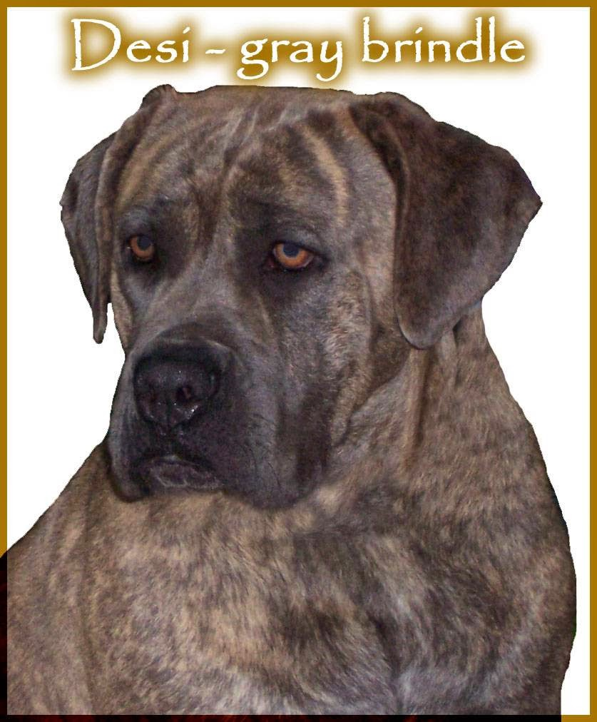 Spirit of Wisdom Rottweiler and Cane Corso | pet store | 12691 Rustlers Ridge, Lusby, MD 20657, USA | 3016749837 OR +1 301-674-9837