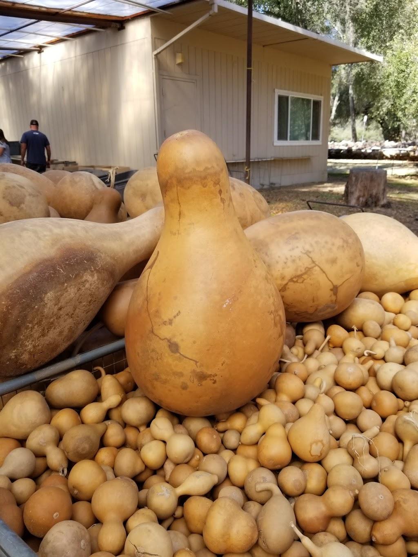Welburn Gourd Farm - store    Photo 10 of 10   Address: 40635 De Luz Rd, Fallbrook, CA 92028, USA   Phone: (760) 728-4271