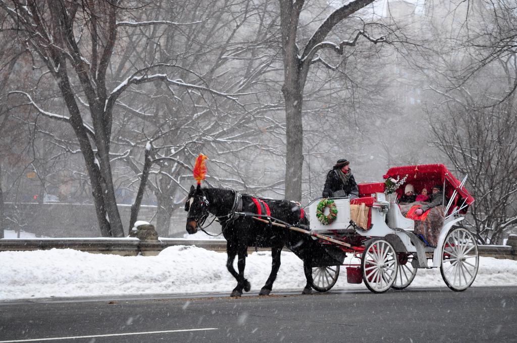 CENTRALPARKHORSES   travel agency   7TH AVE &, Central Park S, New York, NY 10019, USA   2124707893 OR +1 212-470-7893