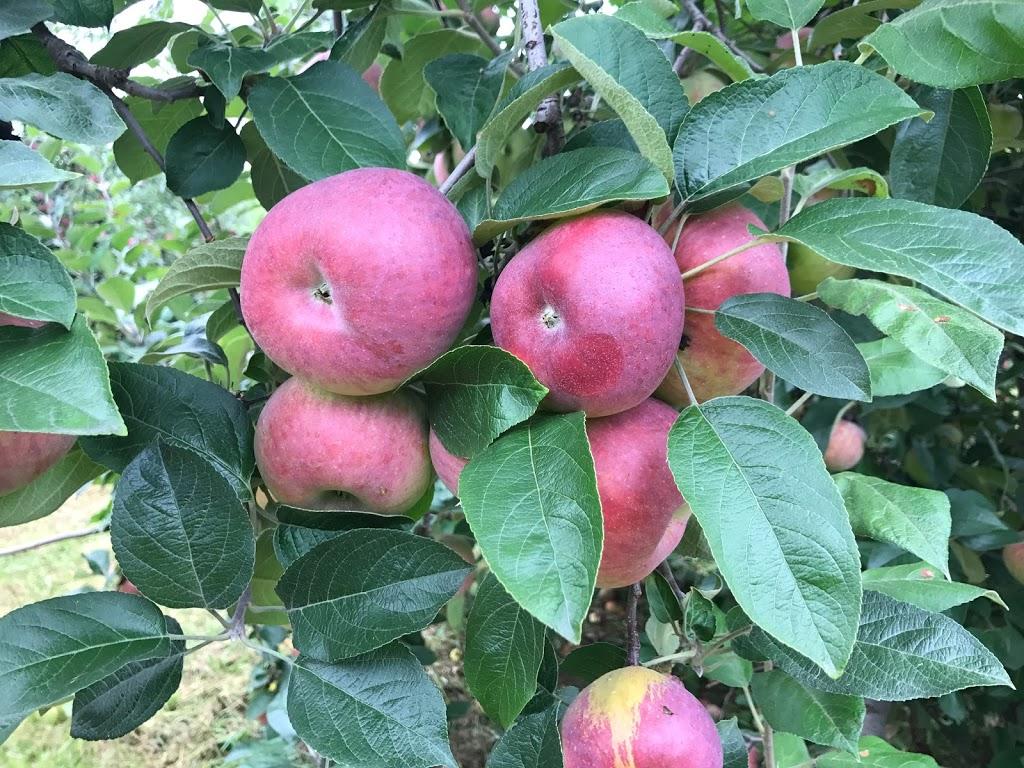 Kelders Farm -   | Photo 7 of 10 | Address: 5755 US-209, Kerhonkson, NY 12446, USA | Phone: (845) 626-7137