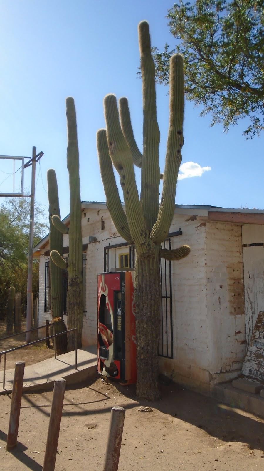 The Papago Café - cafe    Photo 7 of 7   Address: Sells, AZ 85634, USA   Phone: (520) 383-3510