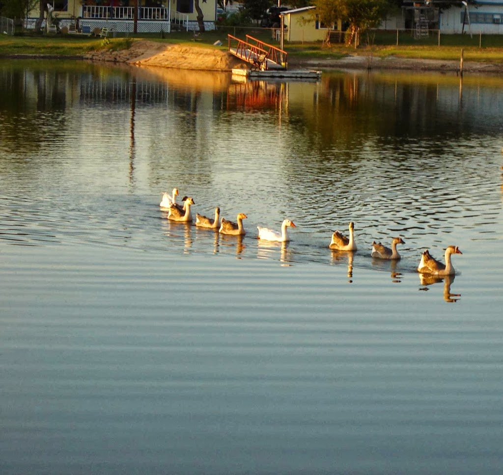 Tranquility Cove - lodging    Photo 4 of 10   Address: 601 Deep Elm, Graford, TX 76449, USA   Phone: (530) 588-4451